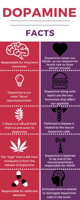 Dopamine Facts information effects